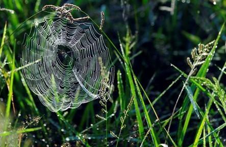 蛛儿与芝草